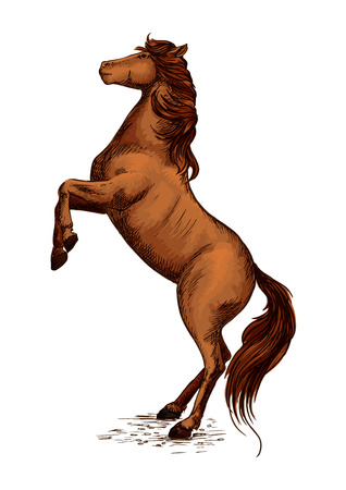 raging: Brown arabian mustang stallion rearing on hooves. Horserace sport symbol of color horse. Vector sketch for equestrian sport, horse riding, equine design. Raging mare with wavy mane Illustration