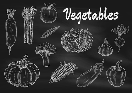 벡터 분필로 칠판에 야채를 스케치합니다. 호박, 아스파라거스와 무의 격리 된 아이콘, 무, 브로콜리, 토마토 및 완두콩, 양배추와 옥수수, 가지와 마늘