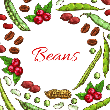 Beans and nuts poster. Vector fresh and roasted coffee beans, nutritious dried peanuts in shell, legume beans, green peas pods. Vegetarian and vegan vegetable food nutrition of plants seeds in round shape Illustration