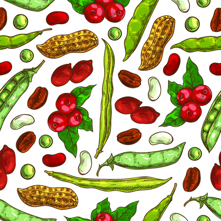 Beans and nuts pattern. Fresh and roasted coffee beans, nutritious dried peanuts in shell, legume beans, green peas pods. Vector seamless background of vegetarian and vegan vegetable food nutrition of plants seeds Illustration