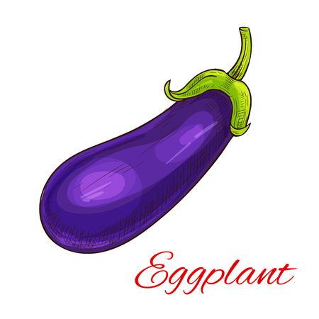 vegetarian cuisine: Eggplant vegetable icon. Sketch of farm agriculture vegetable aubergine, brinjal or guinea squash. Vector isolated object for vegetarian and vegan cuisine design, grocery store or farmer market