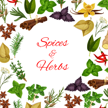 spicy cooking: Seasoning herbs and spices condiments. Spicy herbal cooking ingredients of rosemary and thyme, basil, dill and parsley, sage and bay leaf, anise and oregano, ginger and aromatic vanilla with mint, cinnamon, tarragon, cumin and chili pepper. Vector poster