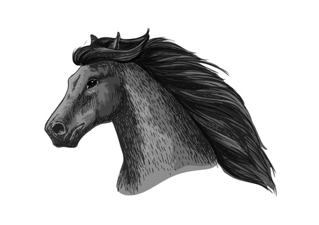Horse head vector sketch. Wild black raven mustang or mare running or racing. Stallion symbol for equestrian horserace club or equine sport riding bets or exhibition design Illustration