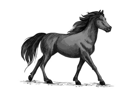 Horse vector sketch. Running or walking wild black raven mustang stallion symbol for equestrian horserace club, equine animal riding sport exhibition or contest Illustration