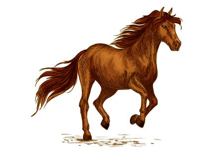 horserace cavallo. Brown Mustang corsa Persico o corse al galoppo. Selvaggio mare o stallone simbolo per equini Montare un animale mostra lo sport, concorso o club corsa equestre. disegno vettoriale