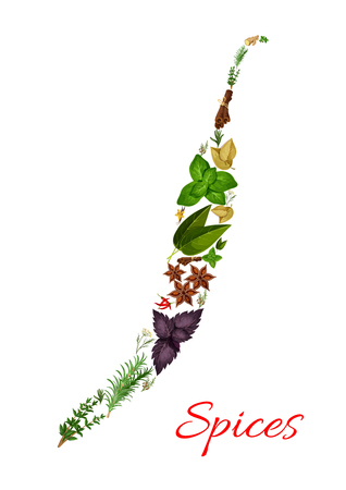 Spices in shape of chili pepper. Rosemary and thyme, basil, dill and parsley, sage and bay leaf, anise and oregano, ginger and vanilla with mint, cinnamon, tarragon, cumin and chili pepper. Vector herbal and spicy seasonings and herbs condiments Illustration