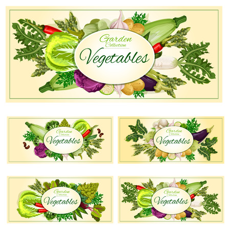 Vegetables banners. Garden veggies, greens zucchini squash, arugula, chinese cabbage and cauliflower, kohlrabi and chili pepper, eggplant and romanesco broccoli, asparagus, beet or carrot, potato, onion and pea, mushrooms. Vector organic harvest Ilustração