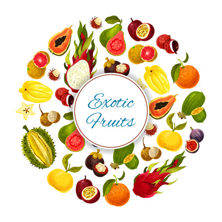 Exotic fruits. Vector poster of tropical fresh grapefruit or red orange, guava and durian, juicy longan and figs, rambutan and mangosteen, passion fruit maracuya and feijoa. Ripe harvest of dragon fruit and lychee, tropic papaya and carambola Illustration