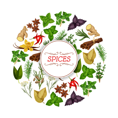 Spice food or seasoning, herb banner. Vanilla and cinnamon, flat-leaved rosemary and star anise, red chili pepper and mint, peppermint or spearmint, ginger rhizome, fennel and cumin, dill and laurus nobilis. Spicy vegetarian nutrition theme Illustration