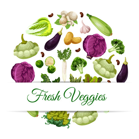 squash: Fresh vegetable food banner. Pattypan squash and broccoli, asparagus and daikon, mushroom and garlic, broad beans and beets, red cabbage and zucchini or courgette, potato and eggplant. Health vegetarian nutrition theme Illustration