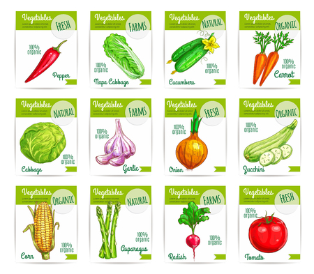 napa: Sale tag or labels, cards with vegetable food. Zucchini or courgette and red chili pepper, napa or chinese cabbage and cucumber, carrot and garlic, onion and corn, asparagus and radish, tomato. Agriculture farming or salad, vegetarian theme