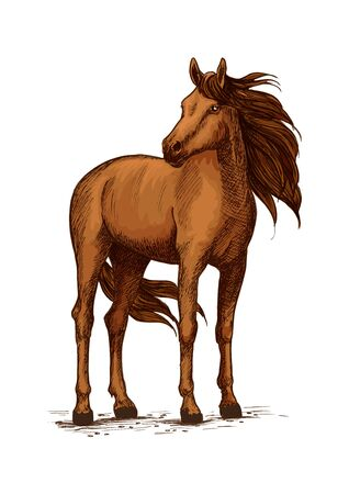 Stand of horse stallion or broodmare sketch. Mustang or domestic chestnut mammal, wild purebred animal with wavy mane and long tail, powerful hoof. Thoroughbred american racehorse symbol, equestrian hippodrome or stable, equine sport Illustration