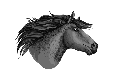 filly: Mare horse or mustang head sketch. Broodmare or equine, horsey animal, dapple gray foal or filly or marish with curvy mane and long ears. Equestrian club or hippodrome sport, feral or domestic mammal, racehorse theme