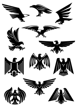war bird: Heraldic eagle and hawk, falcon badge. Aquila with wide opened wing tattoo, bird as insignia of power and freedom, american patriotism symbol. Retro heraldry or historical culture, military or war theme Illustration