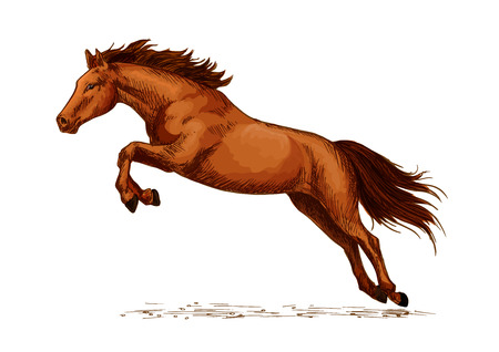 horse like: Jumping stallion or horse, equine sport sketch. Racehorse mustang or broodmare, purebred wild chestnut mare. Horsey or equestrian animal sport with jump over obstacles like oxer or cavaletti, sport club or show,
