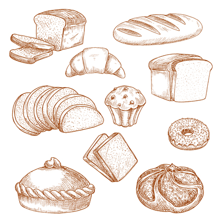 Sketch for baked bread and pastry food. Loaf of sliced anadama and french baguette or baton, brick cereal bakery product, bagel or donut, dough or bun, kifle or kringle, croissant. Bakehouse, shop or store, cooking and crop theme