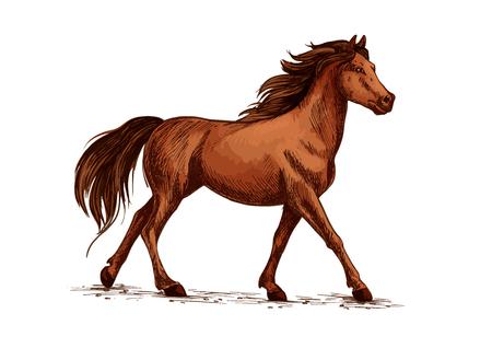 yegua: Equino animal o caballo, semental corriendo bosquejo. Vida silvestre mustang marcha y marsh doméstico ambling, yegua de pura sangre con cascos en tierra o galope de caballos de carreras. Hipódromo, club deportivo y tema de naturaleza salvaje
