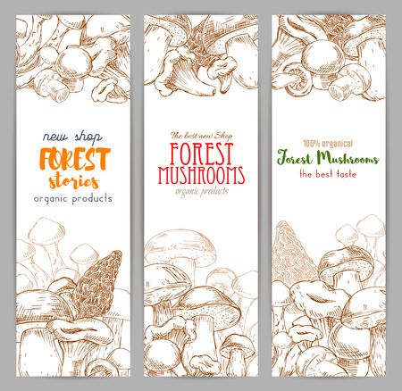 forest wood: Autumn forest banner with mushroom sketch. Drawing of wood nature like russule and morchella, penny bun or cep, porcino or porcini, boletus, birch and red-capped edible fungus, chantrelle or girolle. Vegetarian cafe or restaurant.