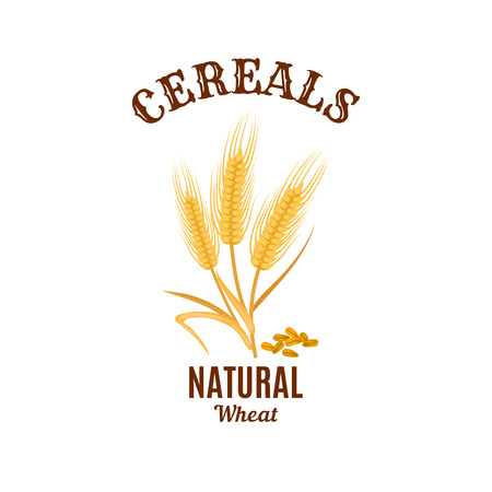 isolated ingredient: Cereals icon. Vector isolated wheat ear plant. Bread food, flour or beer natural ingredient barley, oat or rye. Agriculture or farming cereal reap harvest with grain seeds. Design for bakery or healthy porridge nutrition
