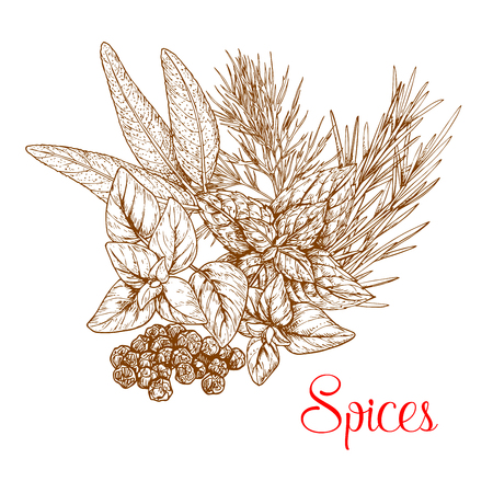 Spices sketch of spicy herb seasonings and herbal culinary condiments. Vector capparis or capers shrubs or caperbush, rosemary or thyme, basil or oregano, sage and mint leaf cooking ingredients Ilustração