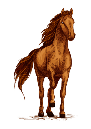 Horse vector sketch. Arabian mustang standing on ground and stomping or stamping with hoof. Brown wild or farm stallion symbol for equestrian racing sport, horse riding races club, equine exhibition