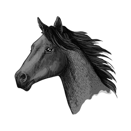 Horse vector symbol of horserace or riding sport. Wild black mustang or mare head with waving mane. Stallion sketch for equine animal race or racing sport contest or equestrian exhibition