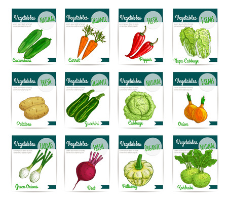 napa: Vegetables cards. Vector price labels set of fresh farm organic veggies cucumber and carrot, bell or chili pepper and chinese napa cabbage, beet and patisony or pattypan squash, zucchini and kohlrabi. Vegetarian and vegan food sketch