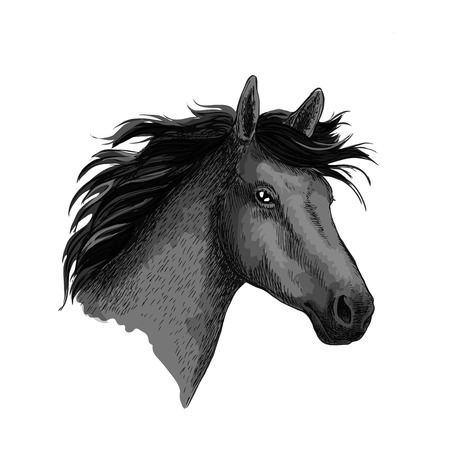 Black horse. Head of mustang stallion or equine foal. Symbol for horse races or racing sport. Wild mare with wavy mane for equestrian horserace riding club, contest bets office or exhibition show