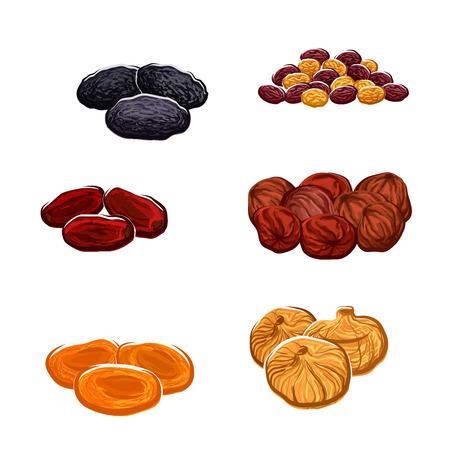 Ikony wektorowe suszonych owoców. Odizolowane rodzynki winogron, daty i soczyste figi egzotyczne, morele, śliwki i czarne śliwki. Wegetariańskie lub wegetariańskie odżywki surowe lub słodycze i deserowe przekąski lub przekąski lub składniki kulinarne