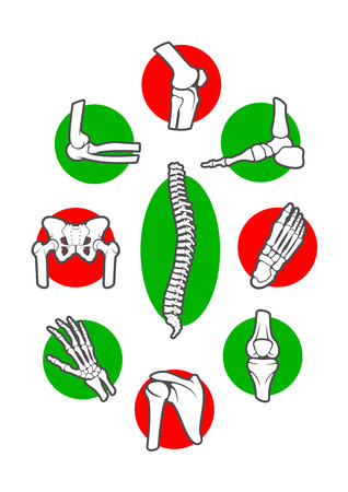 Human skeleton bones and joints icon set. Leg, hand, foot, knee, arm and spine, finger and elbow, pelvis and rib, shoulder and ankle, wrist and chest, hip and backbone, forearm. Orthopedics, anatomy, medicine design