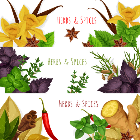 Przyprawy korzenne zioła lub przyprawy ziołowe przyprawy. Rozmaryn i tymianek, liść laurowy, anyż i oregano, bazylia, koperek i pietruszka, imbir, kminek i papryka chili, aromatyczna wanilia z miętą, cynamonem i estragonem. Zestaw transparenty wektorowe Ilustracje wektorowe