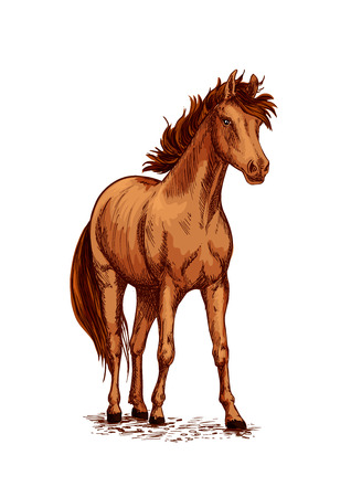 Horse foal or young mare vector sketch. Brown wild or farm stallion symbol for equestrian racing sport, horse riding races club, equine exhibition. Arabian brown mustang standing on ground and stomping or stamping with hoof Illustration