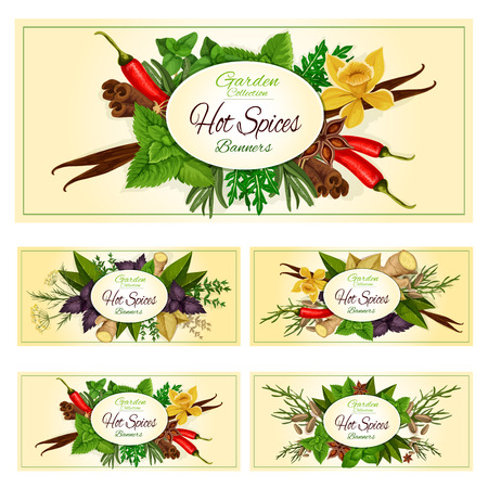 Seasonings, herbal spice and spicy herbs condiments. Anise and oregano, basil, dill and parsley, ginger, cumin and chili pepper, rosemary and thyme, sage bay leaf, aromatic vanilla with mint, cinnamon and tarragon. Vector horizontal banners set