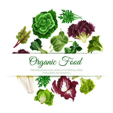 salad: Leafy salads and lettuce vegetables poster with chicory salad and spinach, arugula, mangold kale and collard, lollo rossa and radicchio, romaine and pak choi with sorrel, swiss chard with batavia and gotukola. Vegetarian vegan vector organic food Illustration
