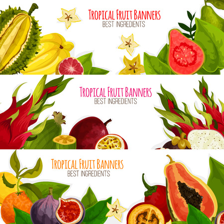 Fruit banners of exotic fruits with tropical fresh mango, grapefruit or red orange, passion fruit maracuya and feijoa, carambola and dragon fruit or pitaya, guava and juicy longan with figs and rambutan, durian and mangosteen. Vector horizontal set Illustration