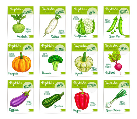 Veggies and vegetables price cards. Vector labels or tags set of kohlrabi, daikon radish and cauliflower, green pea, pumpkin, broccoli. Farm fresh zucchini and patisony squash, beet and eggplant, bell pepper and onion leek, eggplant Illustration