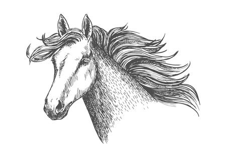Freely running white beautiful horse mare.