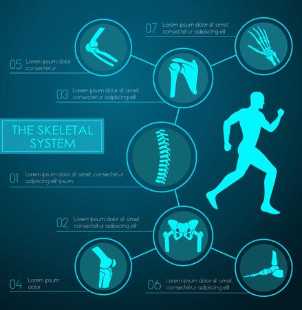 인간의 골격 시스템의 의료 인포 그래픽. 다리, 손, 발, 무릎, 척추, 골반, 어깨, 팔꿈치 뼈와 텍스트 레이아웃과 인간의 골격의 관절 해부학 차트. 의학,
