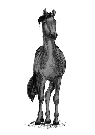 Horse or mustang trotter vector equine symbol for sport races or ride.