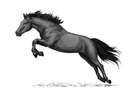 foal: Horse or wild stallion running in gallop and jumping over.