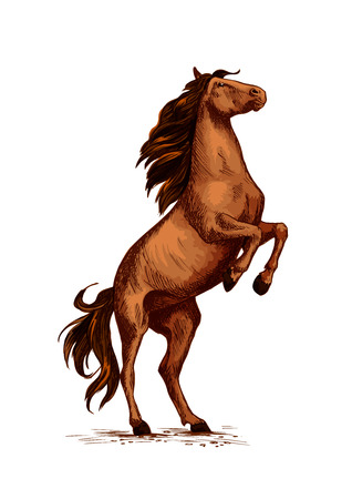 Horse or wild stallion rearing. Arabian brown mustang trotter on rears. Illustration