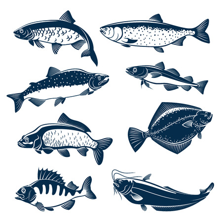 Fishes vector isolated icons. Çizim