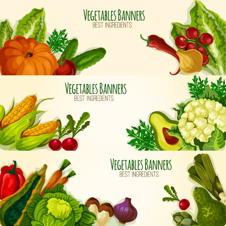 fresh vegetable: Vegetable banners set with fresh organic veggies cauliflower, asparagus and arugula, avocado, broccoli and bell or chili pepper, tomato, zucchini squash and beet, pumpkin, corn and garlic, onion leek, radish and mushroom. Vector vegetarian farm food