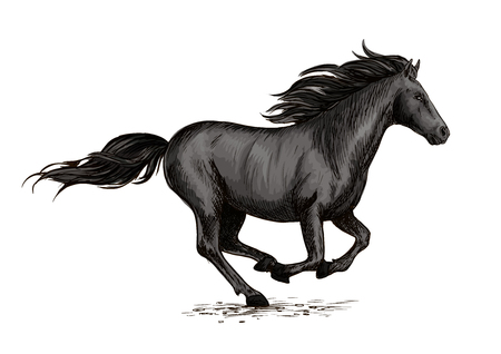 Horse racing on races. Wild black racehorse mustang galloping fast. Horserace sport vector symbol. Equine mare racing in freedom Illustration