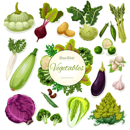 Green vegetable and bean cartoon poster. Fresh broccoli, cabbage, beet and potato, mushroom and garlic, radish, pea, zucchini, asparagus and kohlrabi, squash and salad leaves. Healthy food design