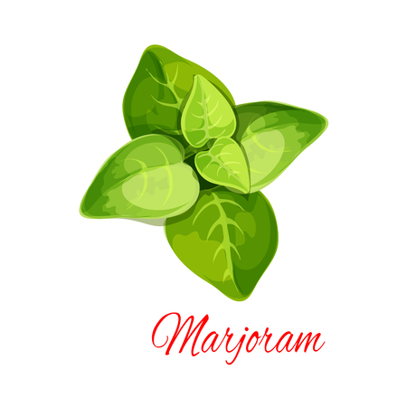 Marjoram spice herb isolated icon. Oregano plant branch with fresh green leaves cartoon poster for healthy food theme, salad recipe, spices or essential oil label design