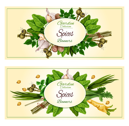 Spices and herbs cartoon banner set. Fresh parsley, mint, garlic, green onion, pepper, nutmeg, cardamom and fennel, celery, sage and lemongrass, poppy seed and sorrel. Spice shop, food packaging label design