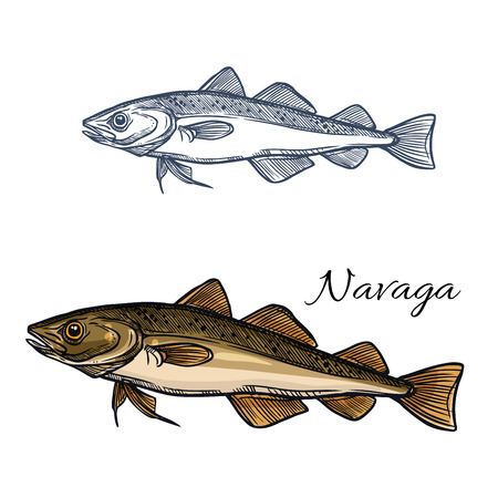 Sea fish navaga isolated sketch for seafood restaurant menu, recipe poster, fish market symbol or food themes design