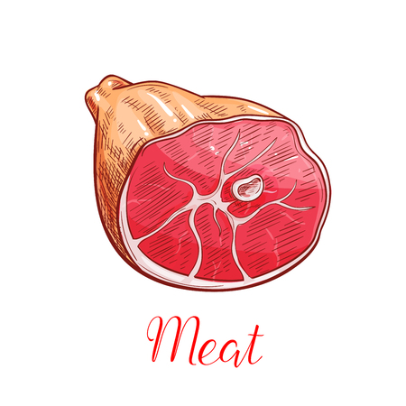 Ham meat sketch. Smoked pork leg with appetizing crust for butcher shop, restaurant barbecue menu or recipe design
