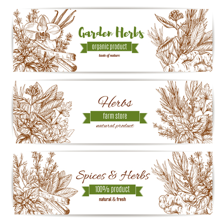 basil: Spice and garden herbs sketch banner set. Natural fresh basil, rosemary and mint, pepper, vanilla and cinnamon, parsley and ginger, thyme and marjoram, dill and bay leaf. Spice shop label, organic farm design